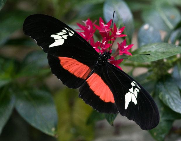kimono-butterfly